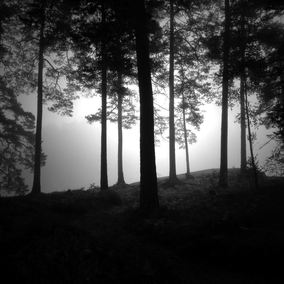 MADE IN SWEDEN Bw_collection Nature_collection The Environmentalist – 2014 EyeEm Awards