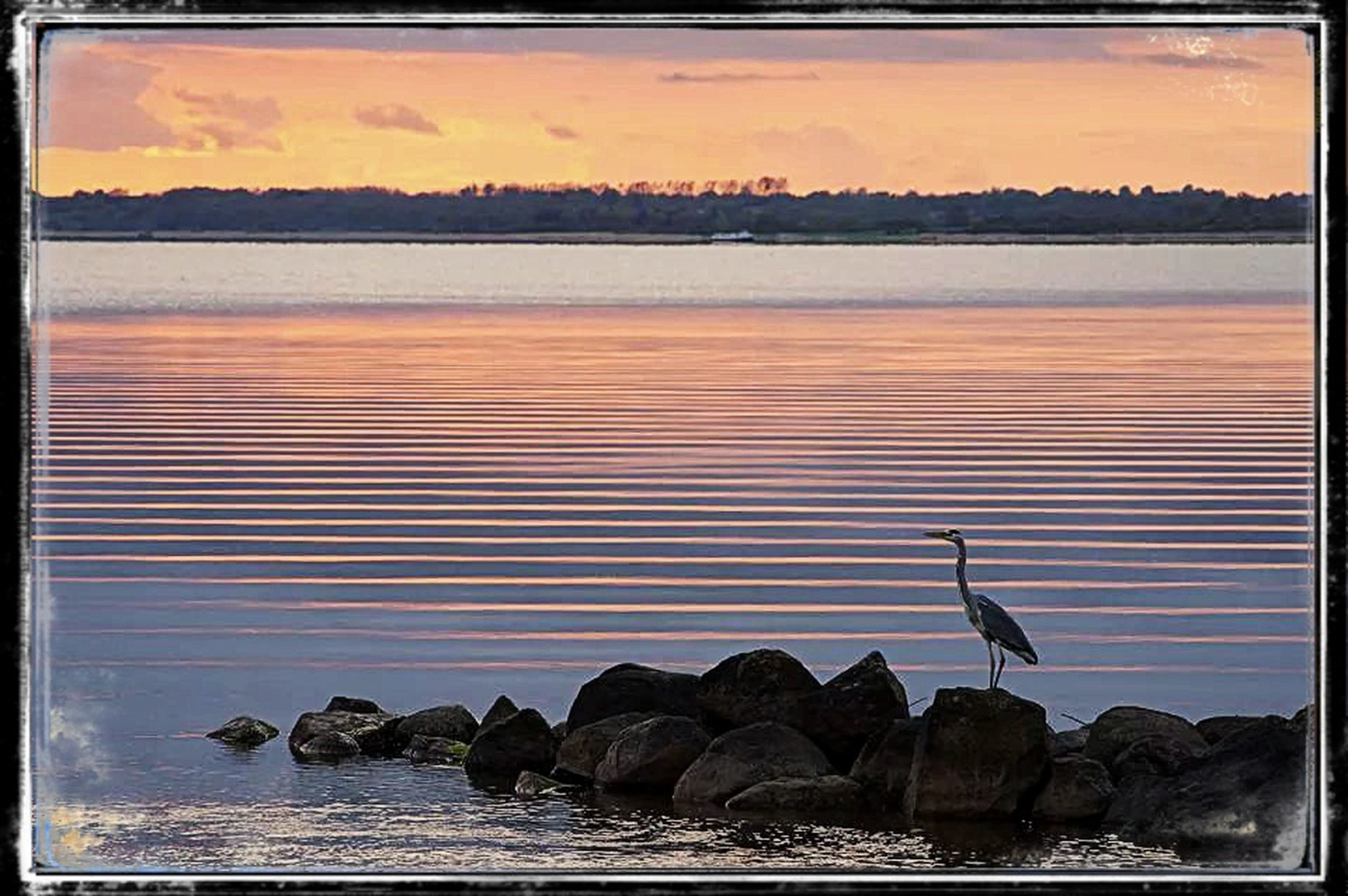 transfer print, water, auto post production filter, sea, bird, sky, sunset, beauty in nature, scenics, tranquility, waterfront, nature, horizon over water, tranquil scene, wildlife, rock - object, animal themes, animals in the wild, reflection, silhouette