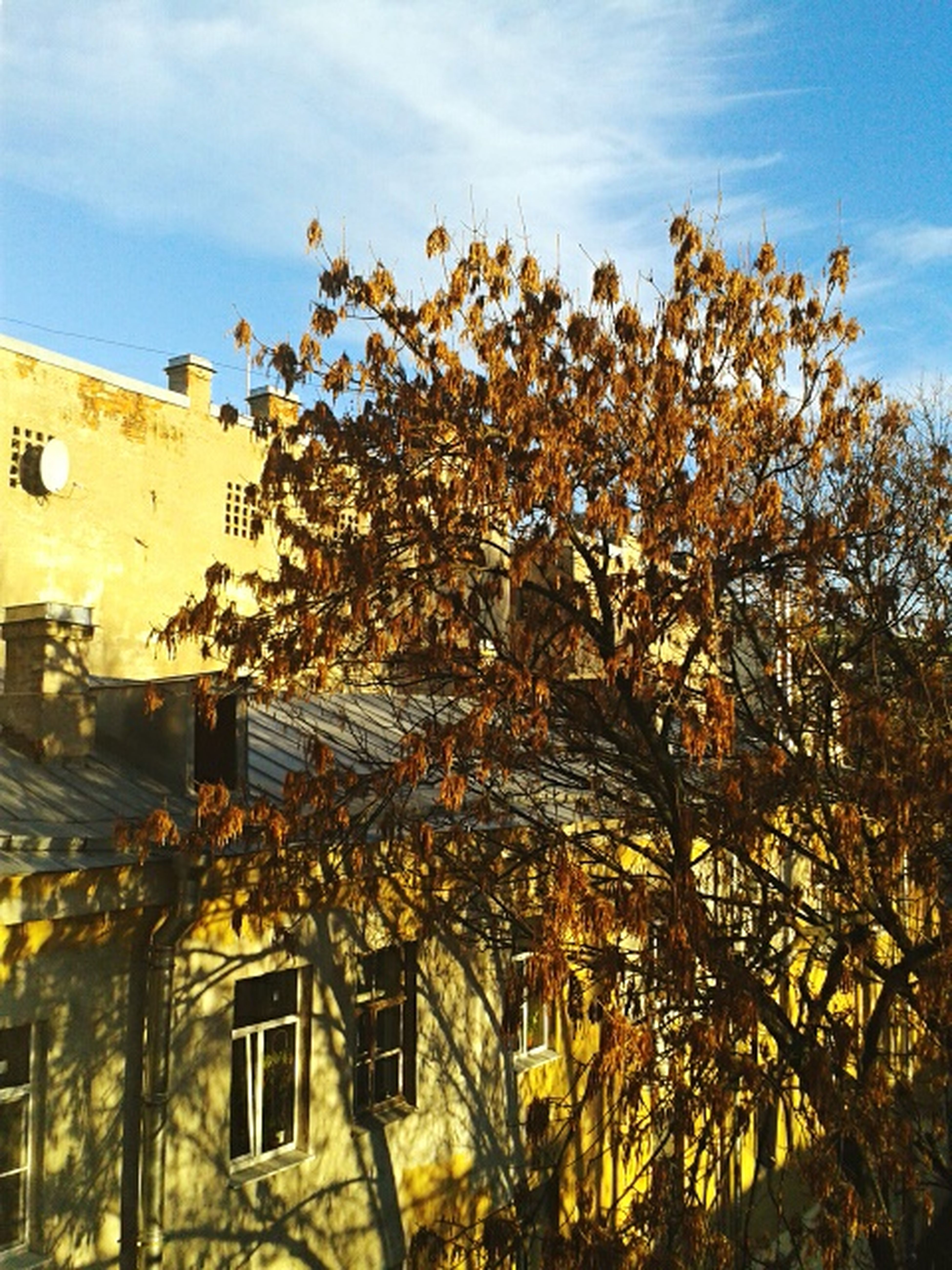 Autumn Autumn Colors Autumn Trees Blue Sky Cristal Clear Sunshine Yellow Leaves Yellow Wall View From Window