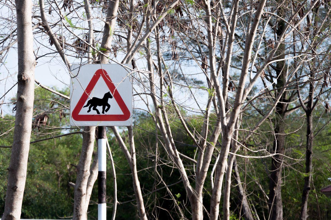 Tree Warning Sign Road Sign Sky Branch Nature Brunei Darussalam Beach Pantai Jerudong Horse EyeEmNewHere EyeEmNewHere