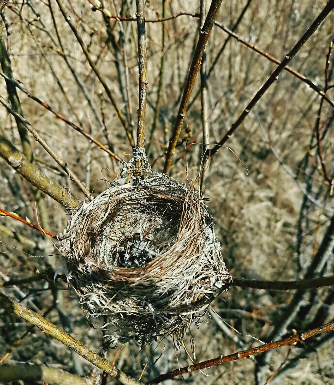 Prime Rural real-estate available for immediate occupancy... Vacant Nest Nid Empty Nest Flew The Coop Bird HouseDried Leaves Bare Tree Branches Nature's Diversities Home Is Where The Art Is Place Of Heart