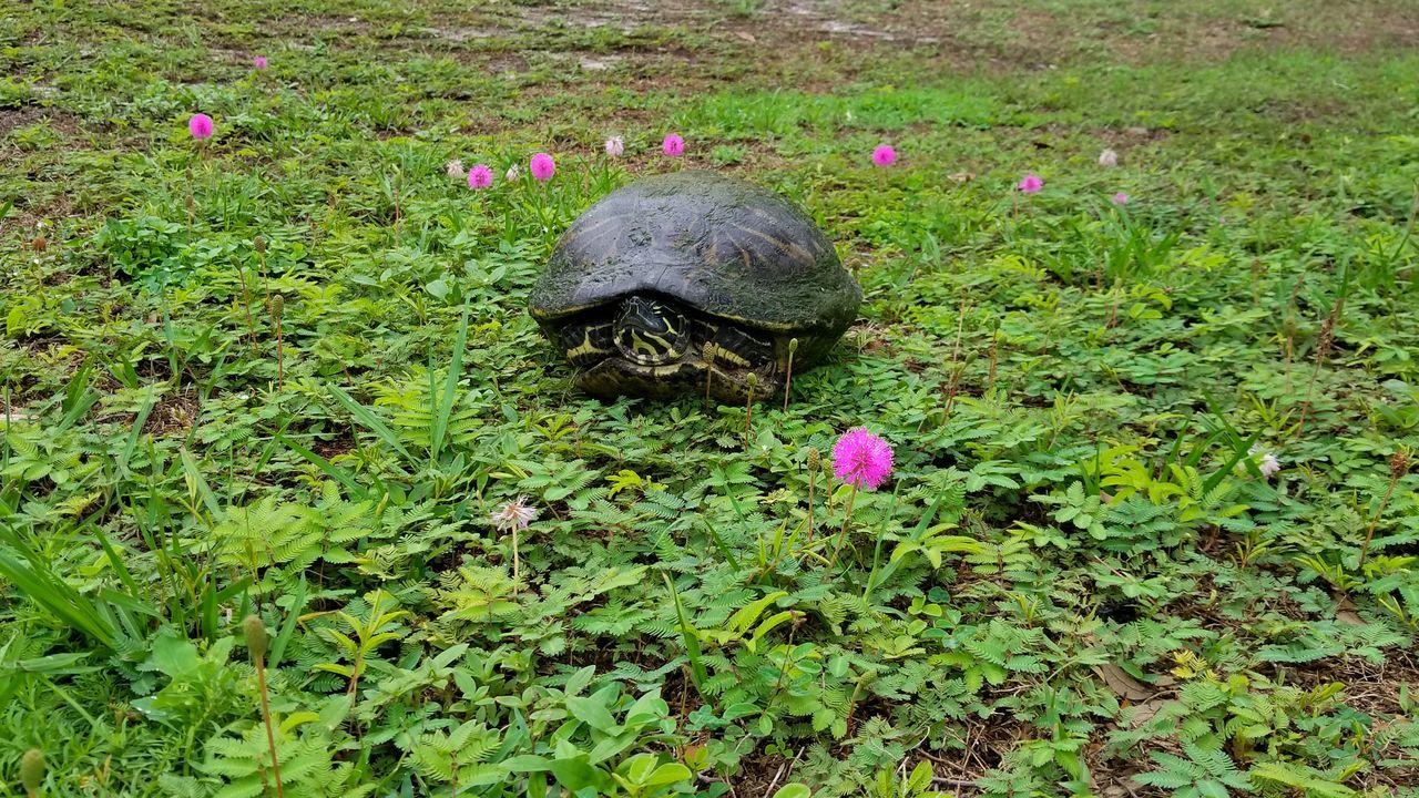 turtle shell eyeem
