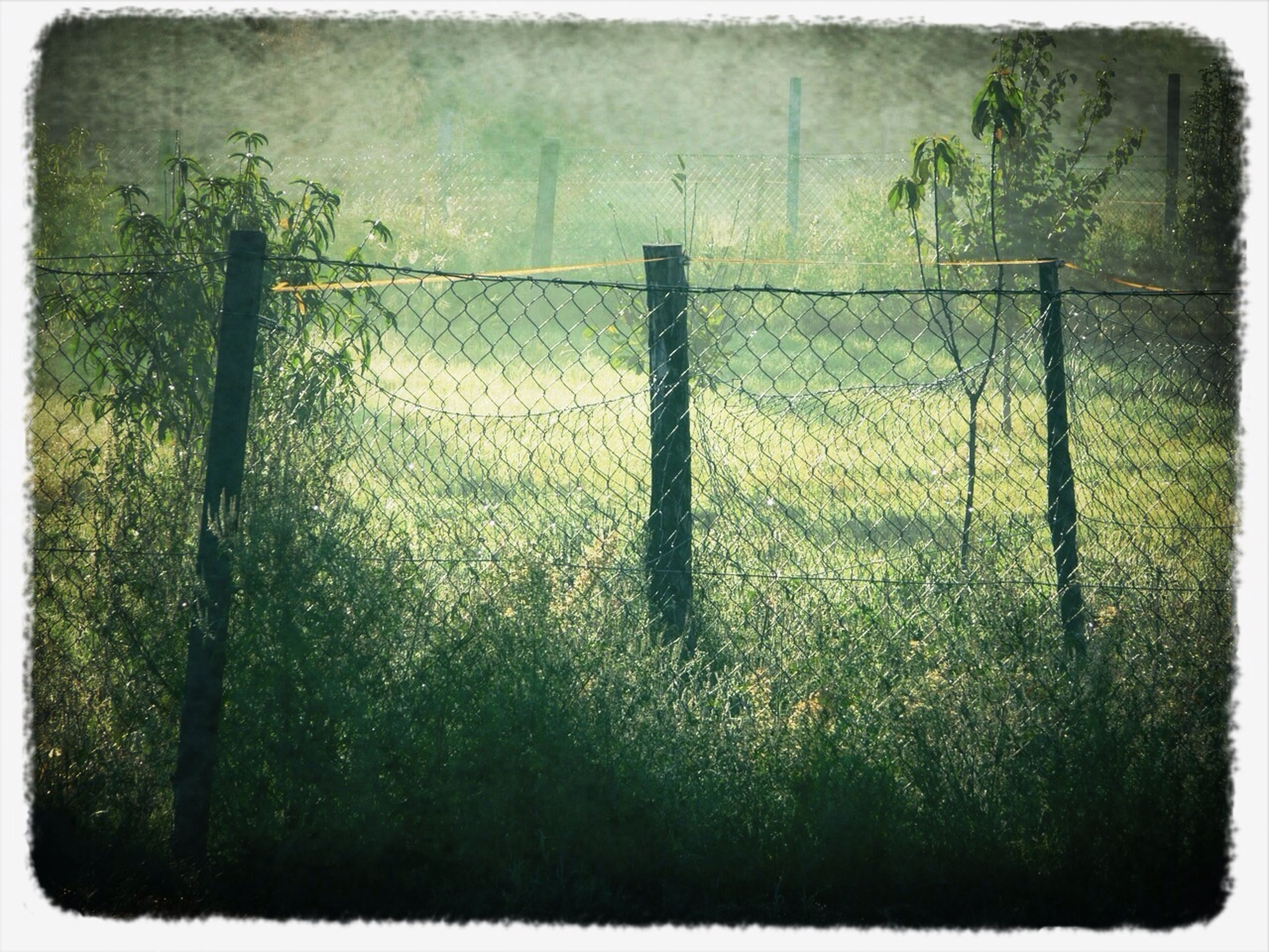 transfer print, auto post production filter, fence, growth, grass, plant, field, protection, safety, security, green color, nature, day, outdoors, chainlink fence, no people, tranquility, grassy, closed, metal