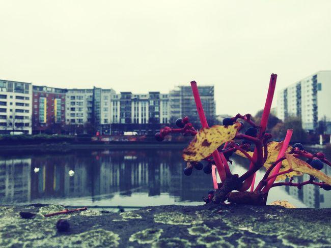 Architecture Berlin Urban Autumn Leaves Autumn Colors Fall Colors Fall Autumn Nature