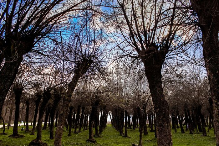 Reaching one another... Bare Tree Beauty In Nature Bekaa Valley Blue Sky Branch Dreamy EyeEm Best Shots EyeEm Gallery EyeEm Nature Lover Grass Growth Lebanon Nature No Leaves Outdoors Sky Tranquility Tree Trees Winter The Great Outdoors - 2017 EyeEm Awards