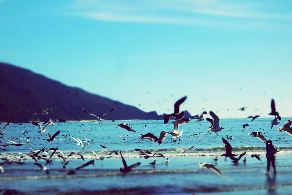 Nature Beach Day Motion Sky Sea Water People Beauty In Nature Eyemphotography Color Photography California Dreaming Life In Motion California EyeEm Nature Lover Flock Of Seagulls Big Sur CA🇺🇸 Blurry On Purpose November Colors Of Autumn