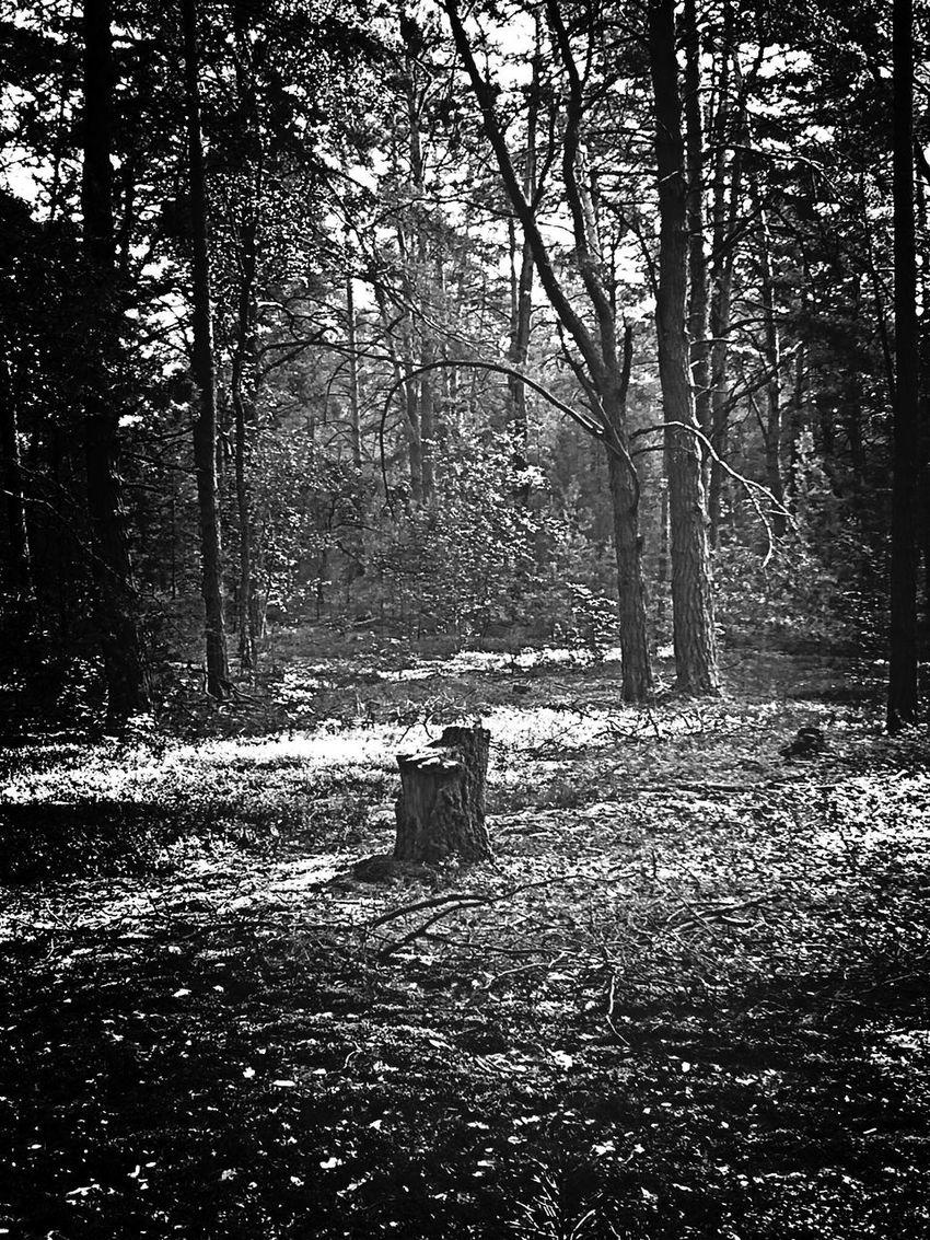 Lonley Welesie Woods Samotny