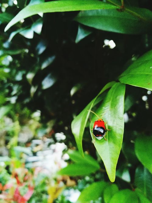 Flora Leaf EyeEm Philippines Nature Biology Park Lucban Kamay Ni Hesus Quezon Blog Newbie Photography South Luzon Close-up Having Fun With Photography HuaweiP9 HuaweiP9Photography Casual Afternoon Outdoors Nature