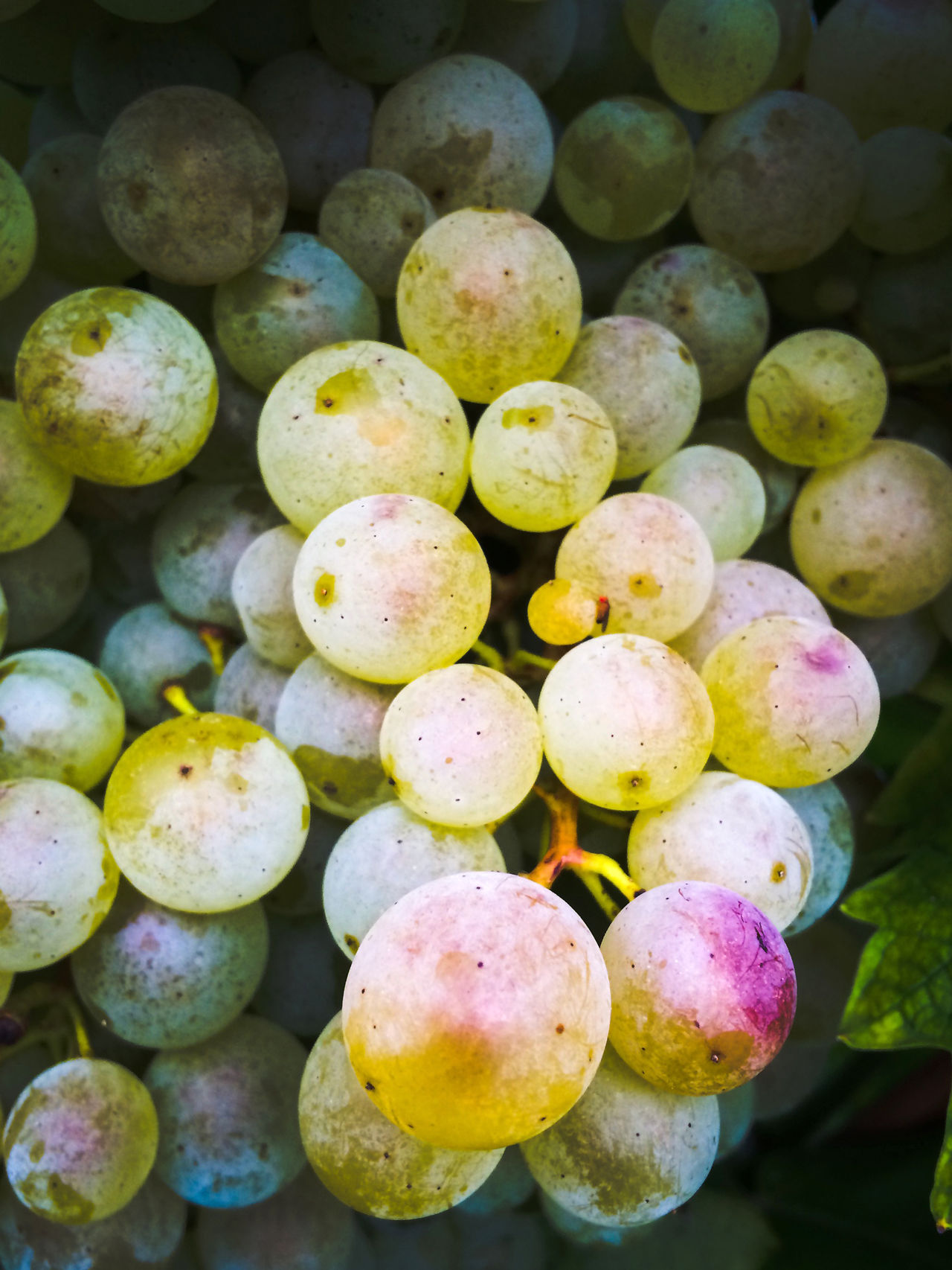 Close-up Focus On Foreground Food And Drink Fruit Grapes Organic Prosecco Uva
