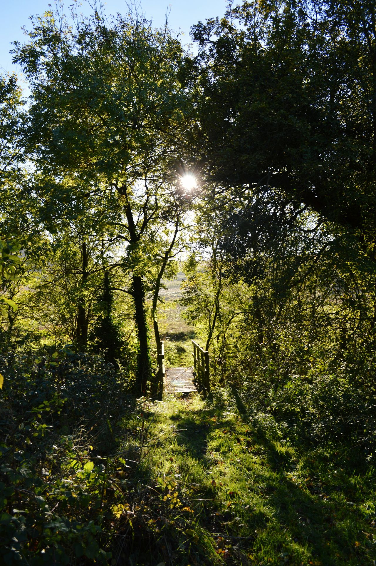 Tree Growth Tranquility Tranquil Scene Sunlight Green Color Scenics Nature Beauty In Nature Sun Footpath Branch Sunbeam Day The Way Forward Green Outdoors Non-urban Scene Sunny Back Lit Bridge Papworth Everard November Fairy Glen