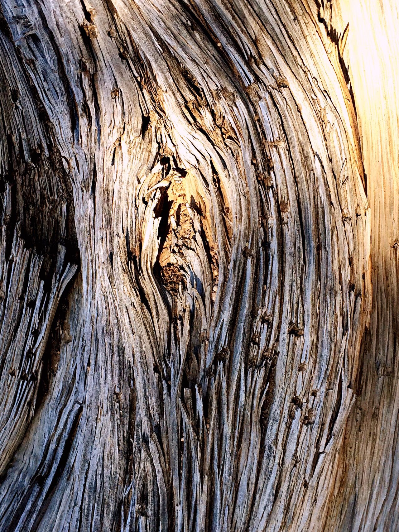 Wood Wooden Texture Wood Pattern Bark Bark Texture Bark Of A Tree Intricate Details Grain Of Wood Macro Photography Macro Beauty Desert Desert Beauty Desert Life Desert Plants Life Through A Lens Golden Light Love Of Nature EyeEm Nature Lover Light And Shadow Light Shadow Tree Tree Trunk Juniper Juniper Trees