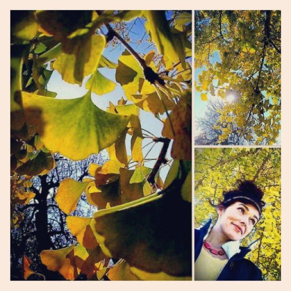 Ginko Stinkyfruit Photogram Photography Stopdropandselfie Photocollage Selfie Contrastingcolors Color Bluesky Autumncolors Fallfoliage Winchesterky Winchesterlove Winchesterfirst