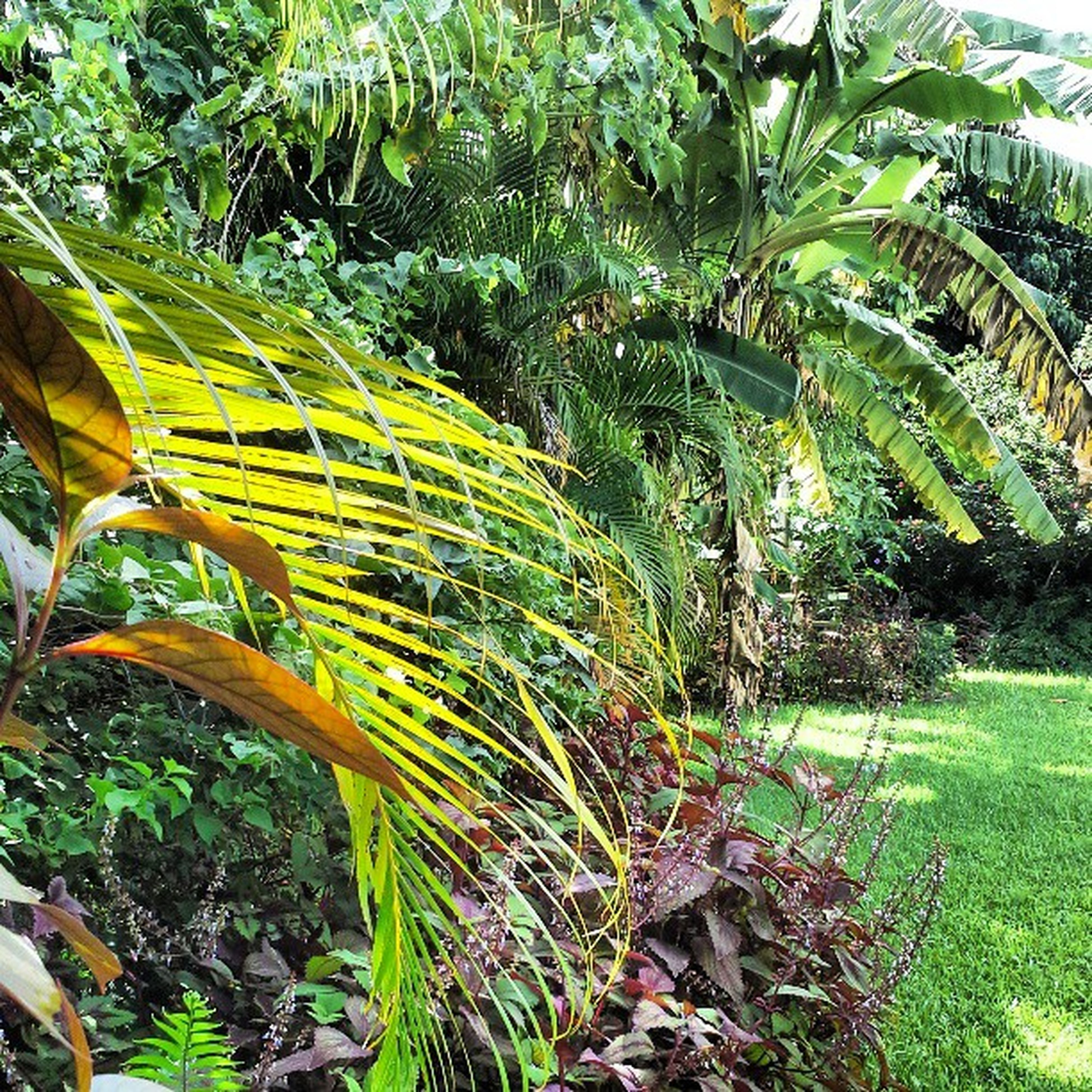 growth, green color, plant, grass, field, tree, nature, tranquility, growing, palm tree, leaf, beauty in nature, agriculture, green, day, outdoors, rural scene, tranquil scene, sunlight, lush foliage