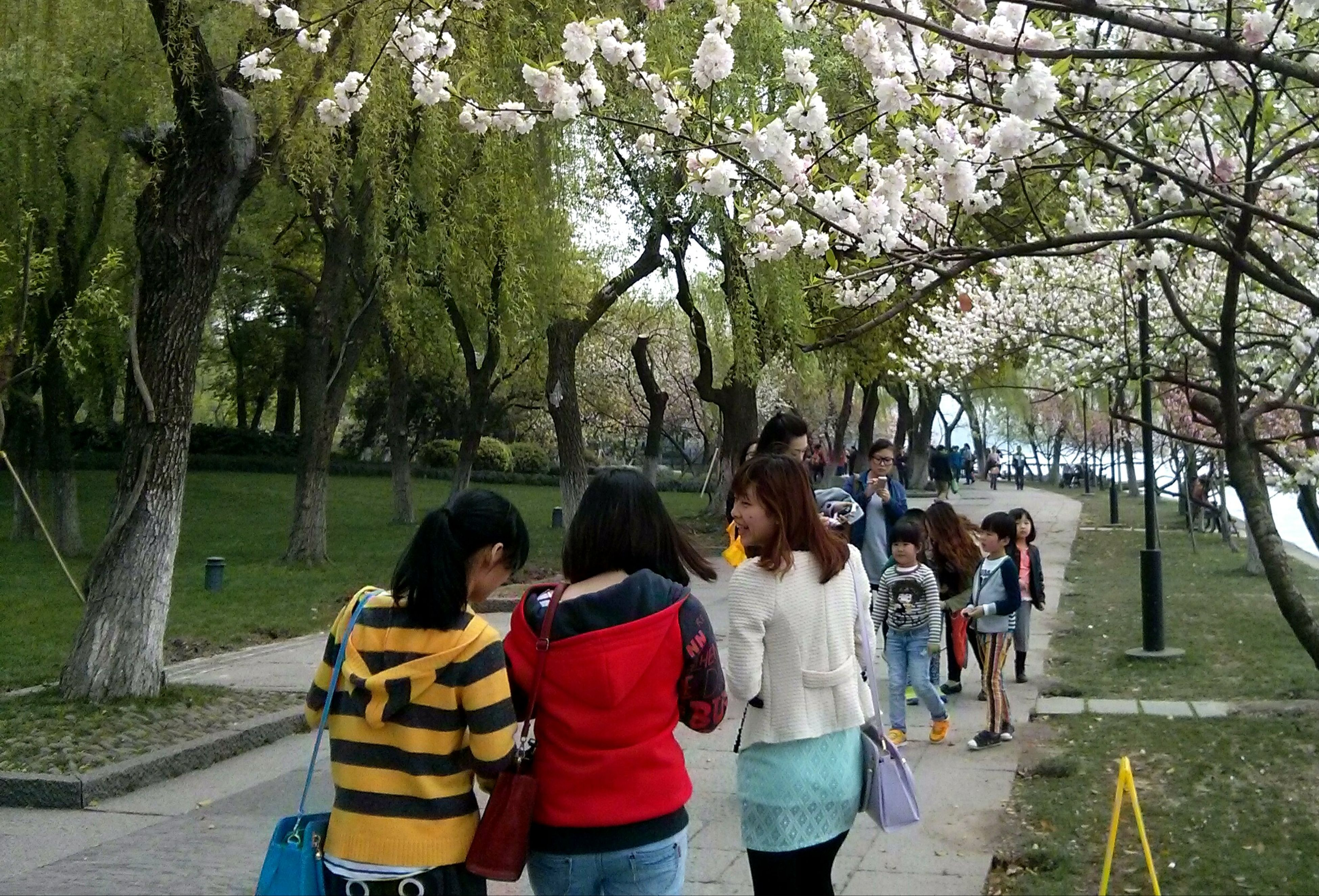 tree, lifestyles, men, leisure activity, person, togetherness, rear view, bonding, casual clothing, park - man made space, love, friendship, full length, sitting, walking, large group of people, day, growth