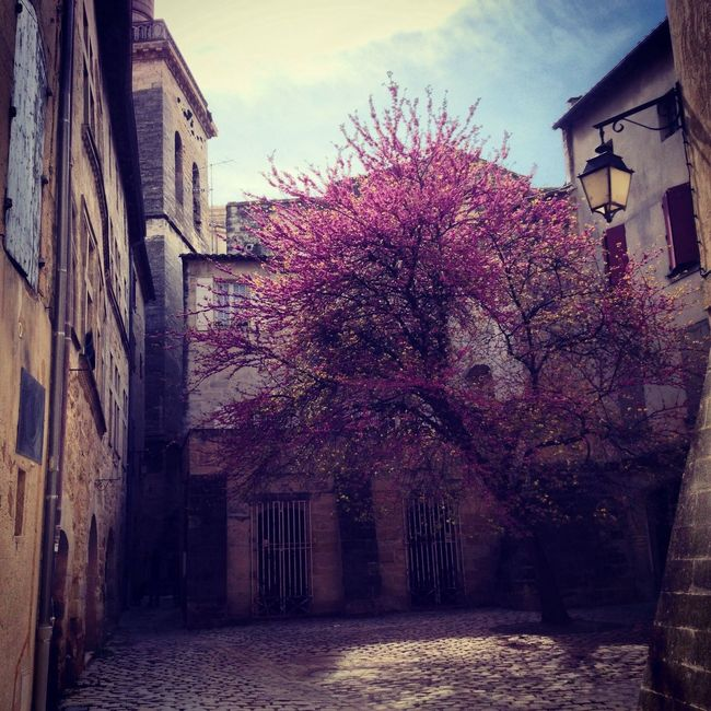 Spring Uzés The EyeEm Facebook Cover ChallengeThe Explorer - 2014 EyeEm Awards