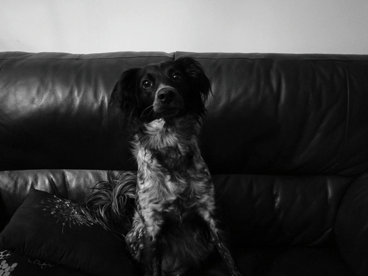 Monochrome Photography Ginevra Dog Pets Domestic Animals Black And White Bianco E Nero Animal