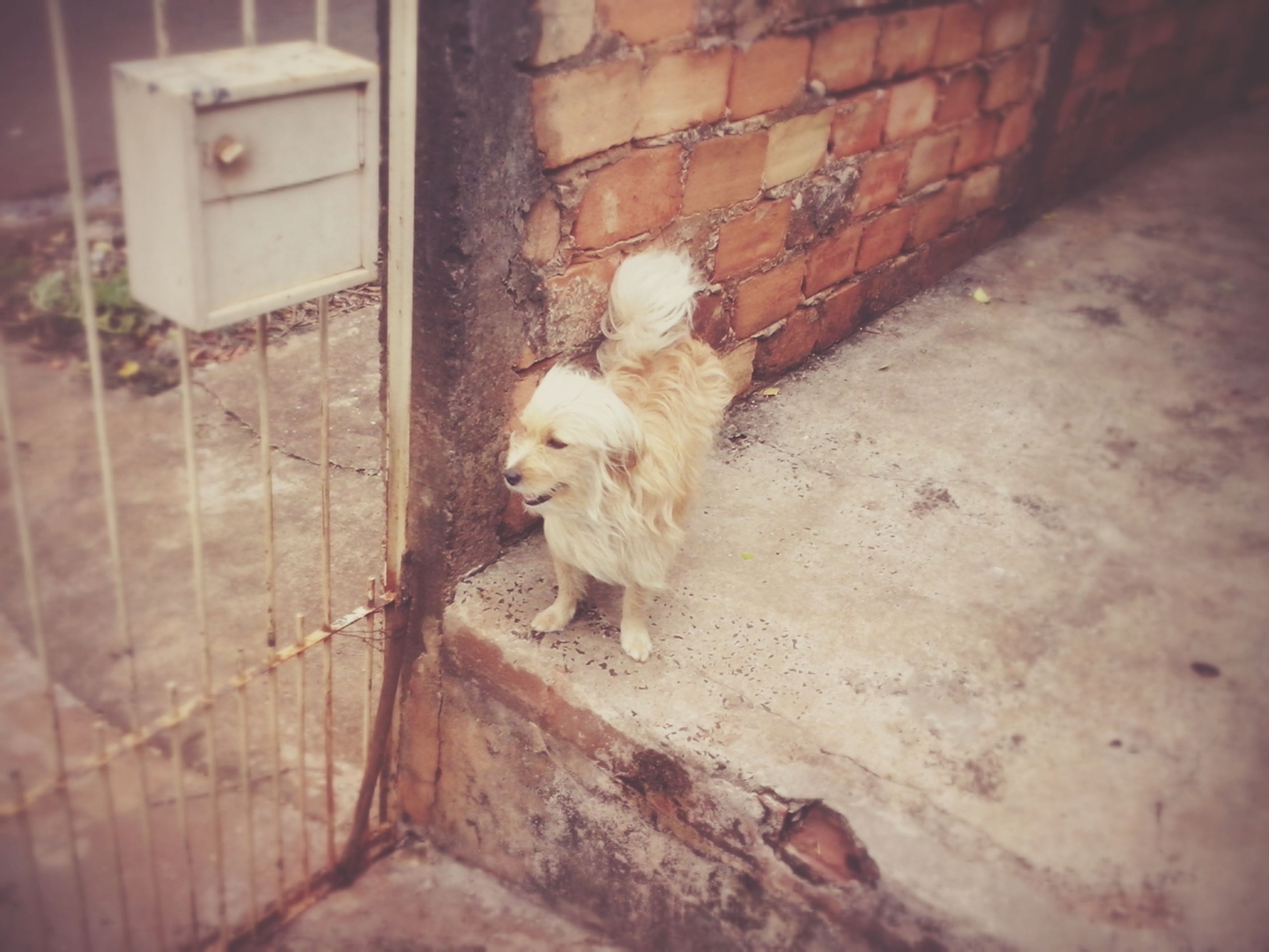 animal themes, one animal, mammal, domestic animals, wall - building feature, pets, built structure, domestic cat, abandoned, cat, architecture, house, no people, building exterior, day, wood - material, damaged, outdoors, wall, feline