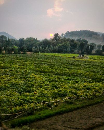 Agriculture Crop  Field Farm Rural Scene Tree Growth Outdoors No People Nature Landscape Beauty In Nature SkyNature Photography Beauty In Nature Nature_collection Backgrounds Sunset_collection Natural Beauty Irrigation Equipment Day Tea Crop Freshness Sunet Photography