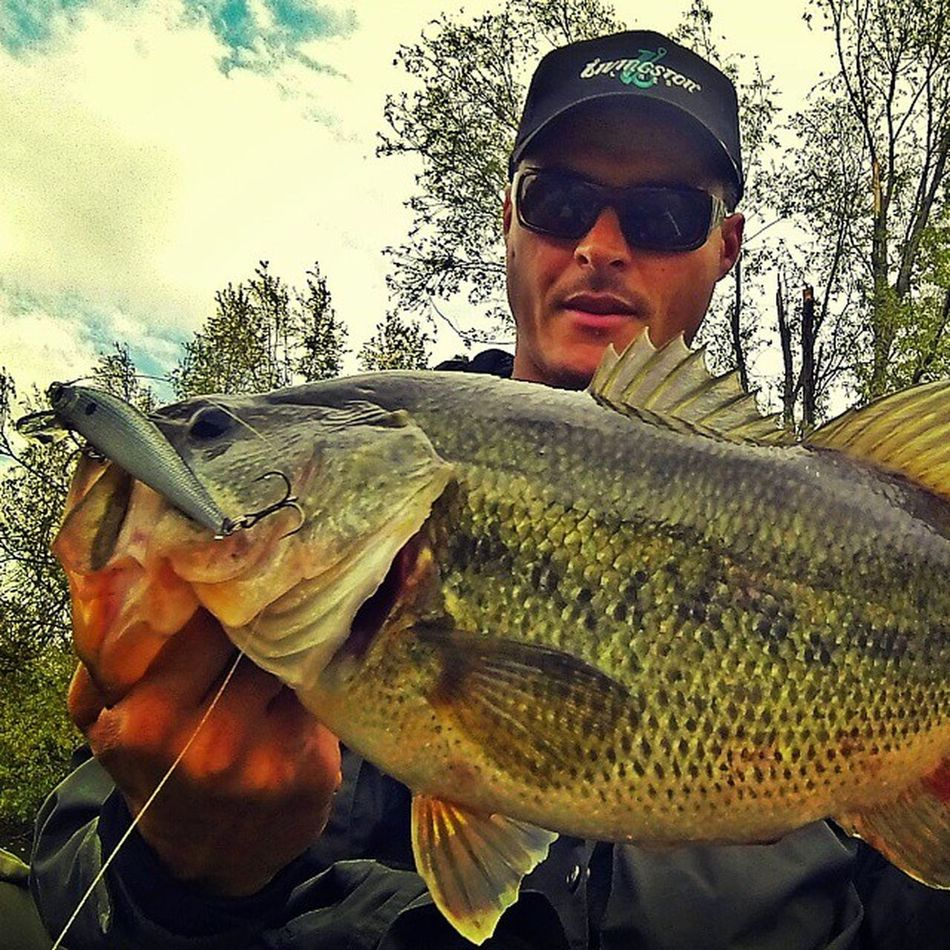 I love pre spawn! This bigmouth smash my lure! Livingstonlures Bassfishing Prespawnbass Prespawn Bassfishin Blackbassfishing Blackbass Thewaterismystadium