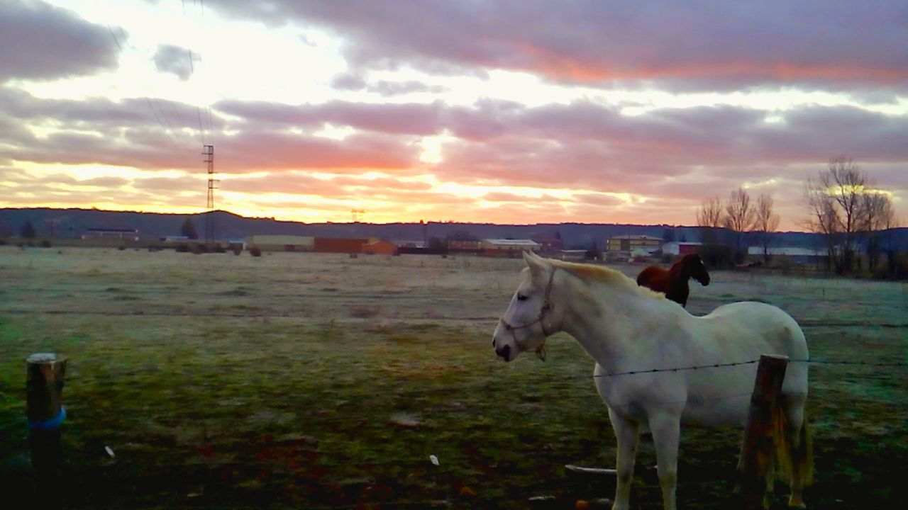 Caballos al amanecer... Waiting Game LeonEsp  Españoles Y Sus Fotos StreamzooVille Streamzoo Family Telling Stories Differently Horse Cloud - Sky Sky Ranch Grass Field Hoofed Mammal Nature Sunrise_sunsets_aroundworld Sunrise_Collection Sunrise Porn