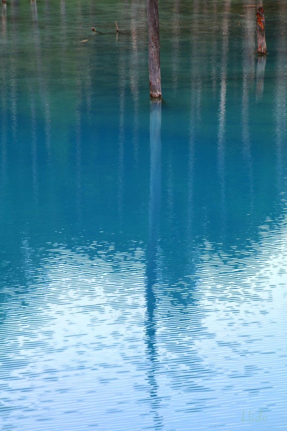 青い池 Bluepond 水 青い水 樹木 枯木 反射 写り込み 水面 波 Colour Of Life