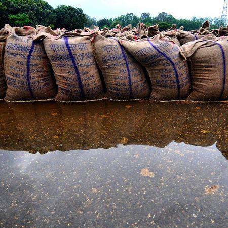 Bhegi bharat sarkar Hindustan_times Sacks of wheats with stamp of Bharat sarkar laying the pool of water after the rain in chandiagrh on Thursday April 16,2015. Bheegi si Bharat Sarkar in Chandigarh