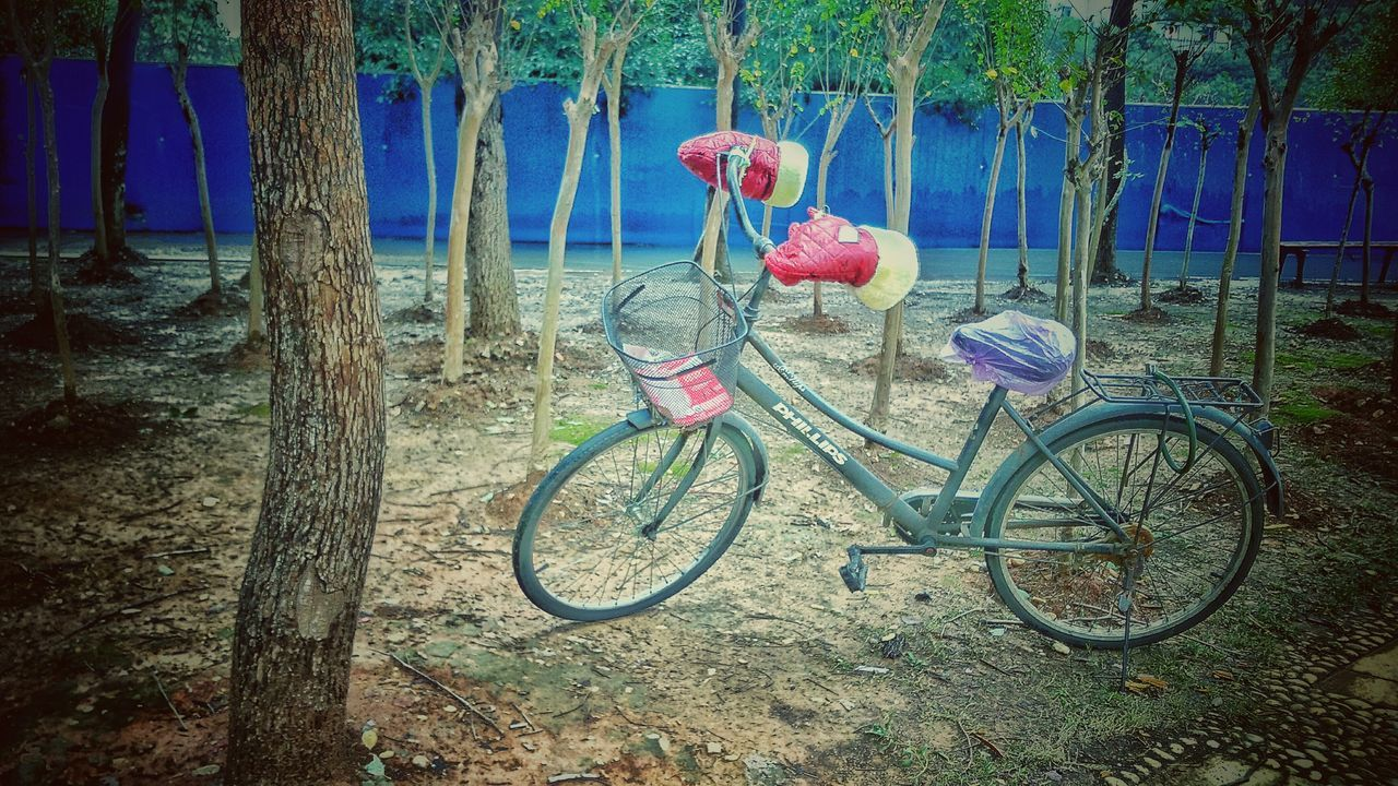 bicycle, transportation, tree, mode of transport, day, no people, outdoors, stationary, land vehicle, hanging, nature, growth, beauty in nature