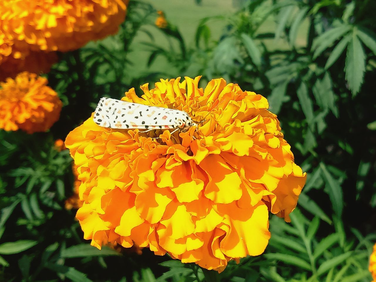flower, petal, one animal, animal themes, insect, plant, freshness, growth, fragility, nature, animals in the wild, beauty in nature, outdoors, flower head, yellow, day, animal wildlife, no people, butterfly - insect, close-up, blooming, pollination