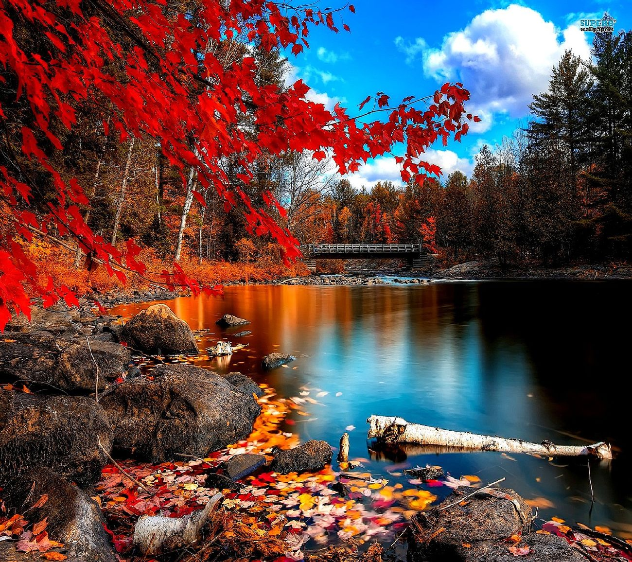 Autumn Leaves Have Fallen, Winter Is Approachinleaves