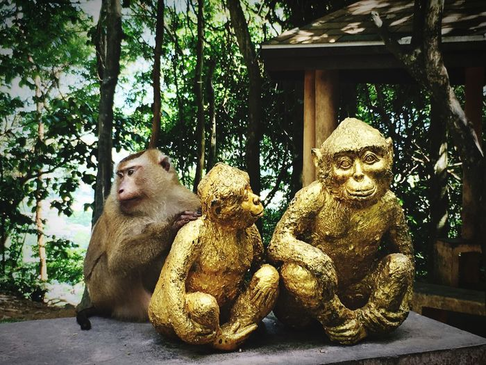Monkey Animal Themes Day Sculpture Tree Nature Outdoors Statue Thailand Monkey Hill Phuket 🐒 Beauty In Nature