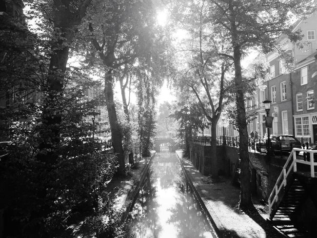 Tree Sunlight Architecture Growth City Diminishing Perspective Perspective Day Sun Tranquility Eyemphotography Nature On Your Doorstep Eye4photography  EE Love Connection! Taking Photos Water Grayscale Monochrome Blackandwhite Photography Utrecht Canal EyeEm Black&white! EyeEm Nature Lover Nature Nature_collection