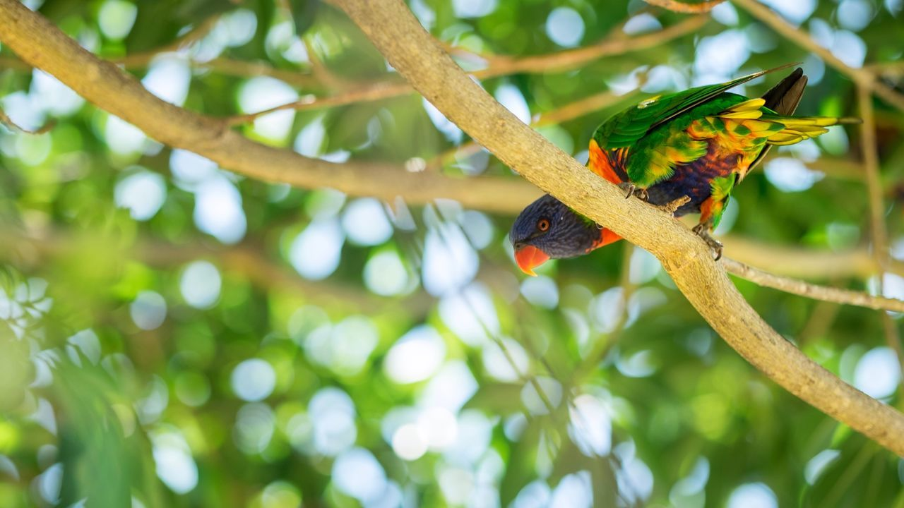 Low Angle View Of Parrot On Branch