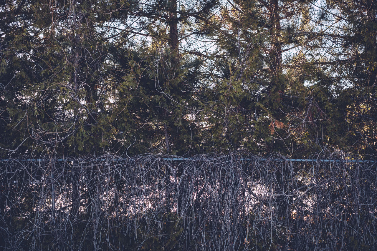 Beauty In Nature Branch Chain Link Fence Day Fence Forest Growth Nature No People Outdoors Tranquil Scene Tranquility Tree