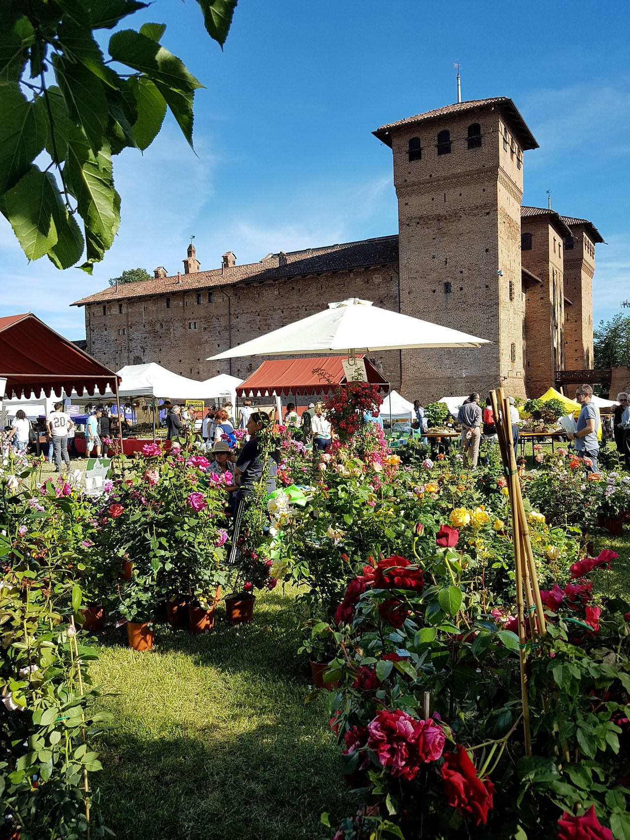 History Outdoors Architecture Sky Built Structure Day Building Exterior Flower Nature Cherasco Langhe Piedmont Italy Ancient Italian Castle Flowers Fair Beauty In Nature Plant Castle Travel Destinations People And Places