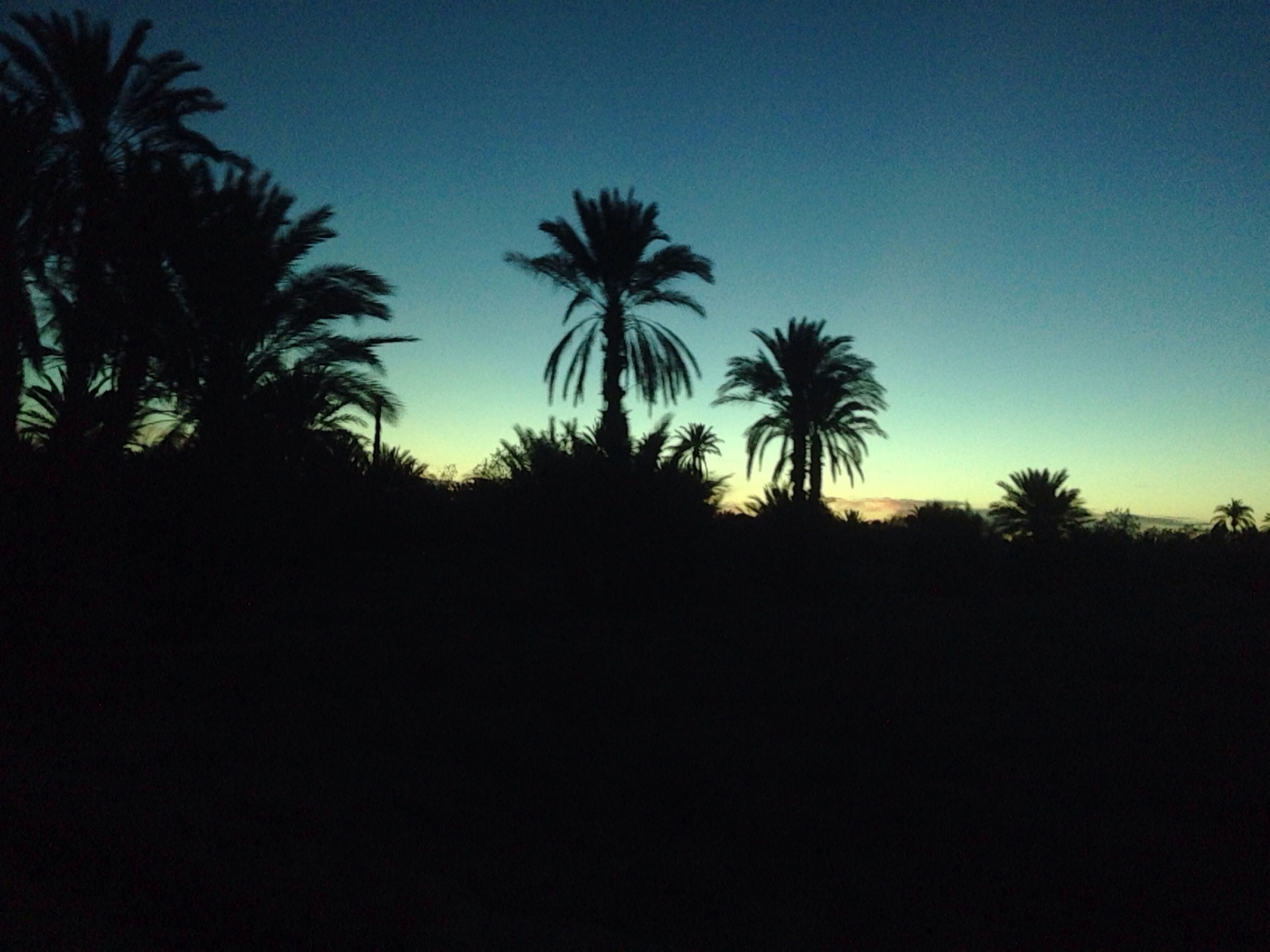 palm tree, silhouette, tree, clear sky, copy space, tranquility, tranquil scene, beauty in nature, scenics, nature, growth, sunset, low angle view, blue, sky, outline, dusk, idyllic, outdoors, no people