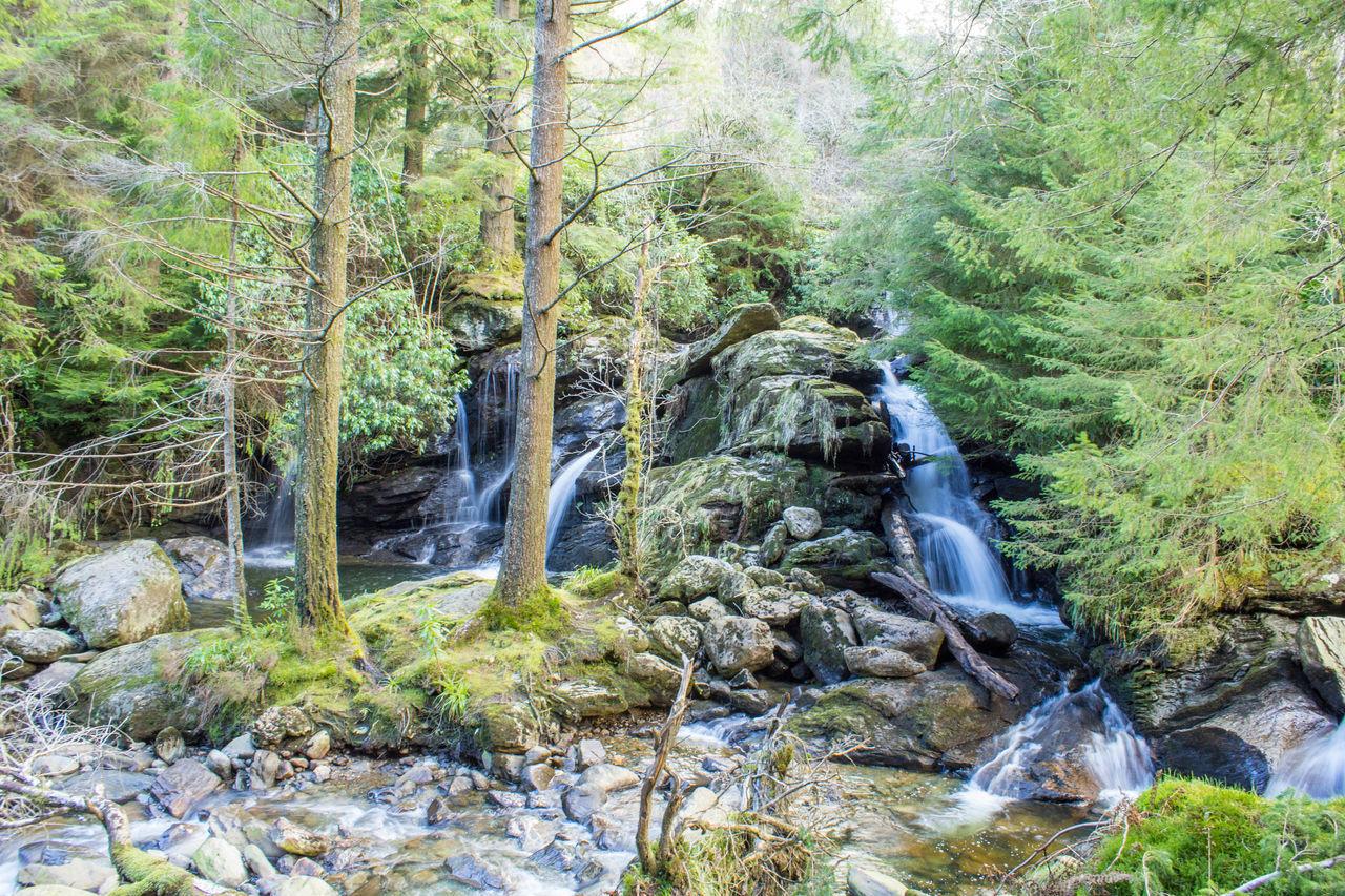 Beautiful stock photos of scotland, forest, tree, water, stream