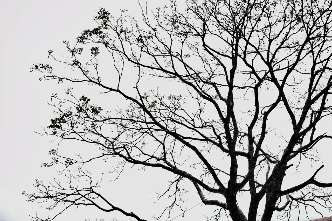 Nature Ink Branch Backgrounds Bird Bare Tree Beauty In Nature Flying Outdoors No People Sky Day Water Tree