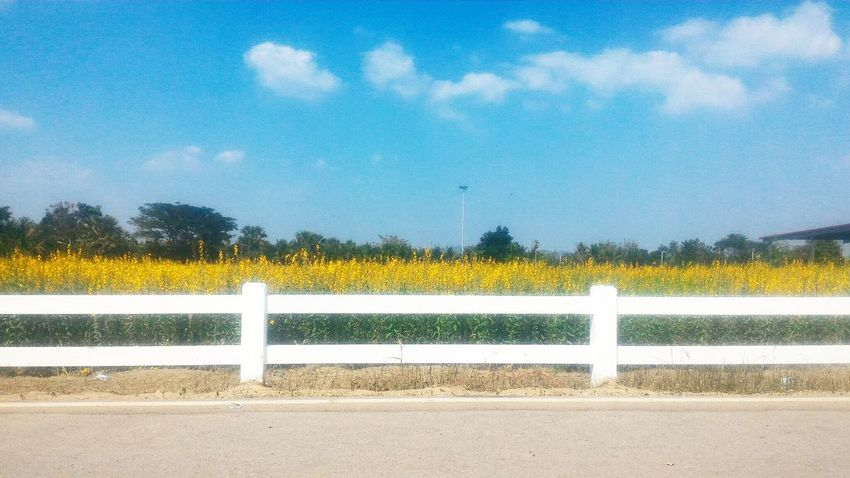 Fence View Rural Scene Outdoors Beauty In Nature Sky
