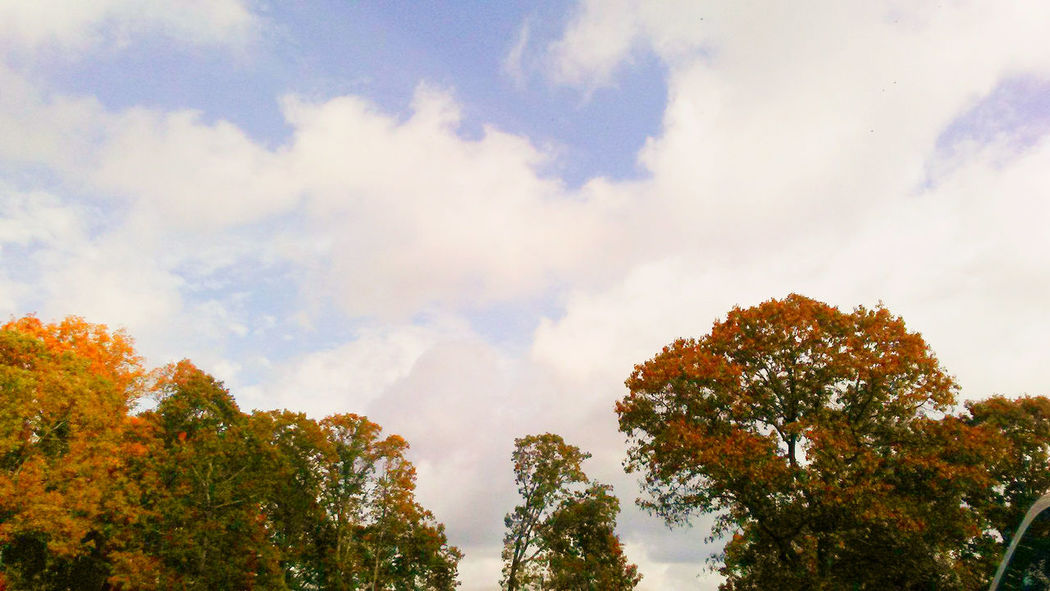 Colorful Leaves Trees White Clouds Autumn Beauty In Nature Colorful Leaves In Autumn Day Forest Growth Low Angle View Nature No People Outdoors Scenic View Scenics Sky Tranquil Scene Tranquility Tree Trees And Nature Trees And Sky Treescollection White Clouds And Blue Sky White Clouds Blue Sky White Clouds In Blue Sky