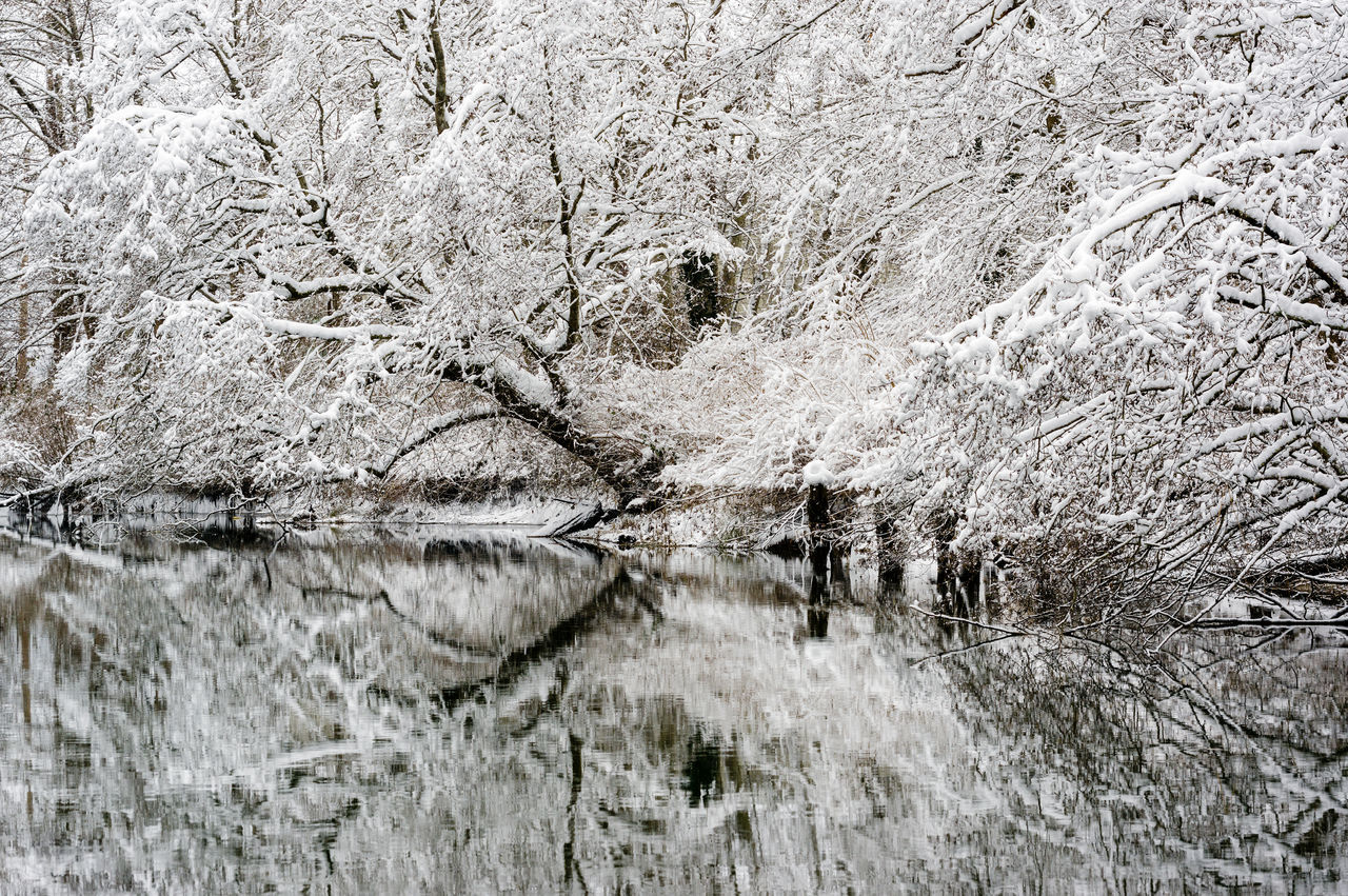 Beauty In Nature Branch Day Nature No People Outdoors Reflection_collection Tree Water