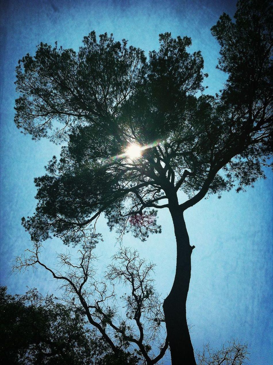 à l'ombre des cigales... EyeEm Nature Lover Échappée Belle.