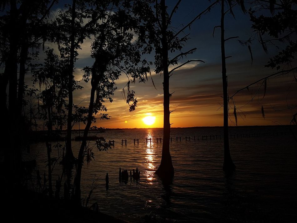 Beautiful Sunset Sunset Reflection Water Silhouette Sky Beauty In Nature Horizon Over Water Florida Life Outdoors Cloud - Sky River Florida Tranquility Tree