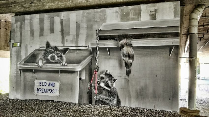 Bed And Breakfast : Ones Amore : Coons Racoon Racoons Painted Seitenschneider Wall Grey Graffiti Graffiti Wall Graffiti Art by: ALBINO_ONE : Mural on Freewall in Bregenz 2Hände