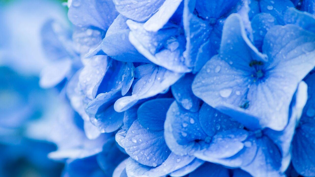 Flowers Nature Taking Photos Streamzoofamily hydrangea