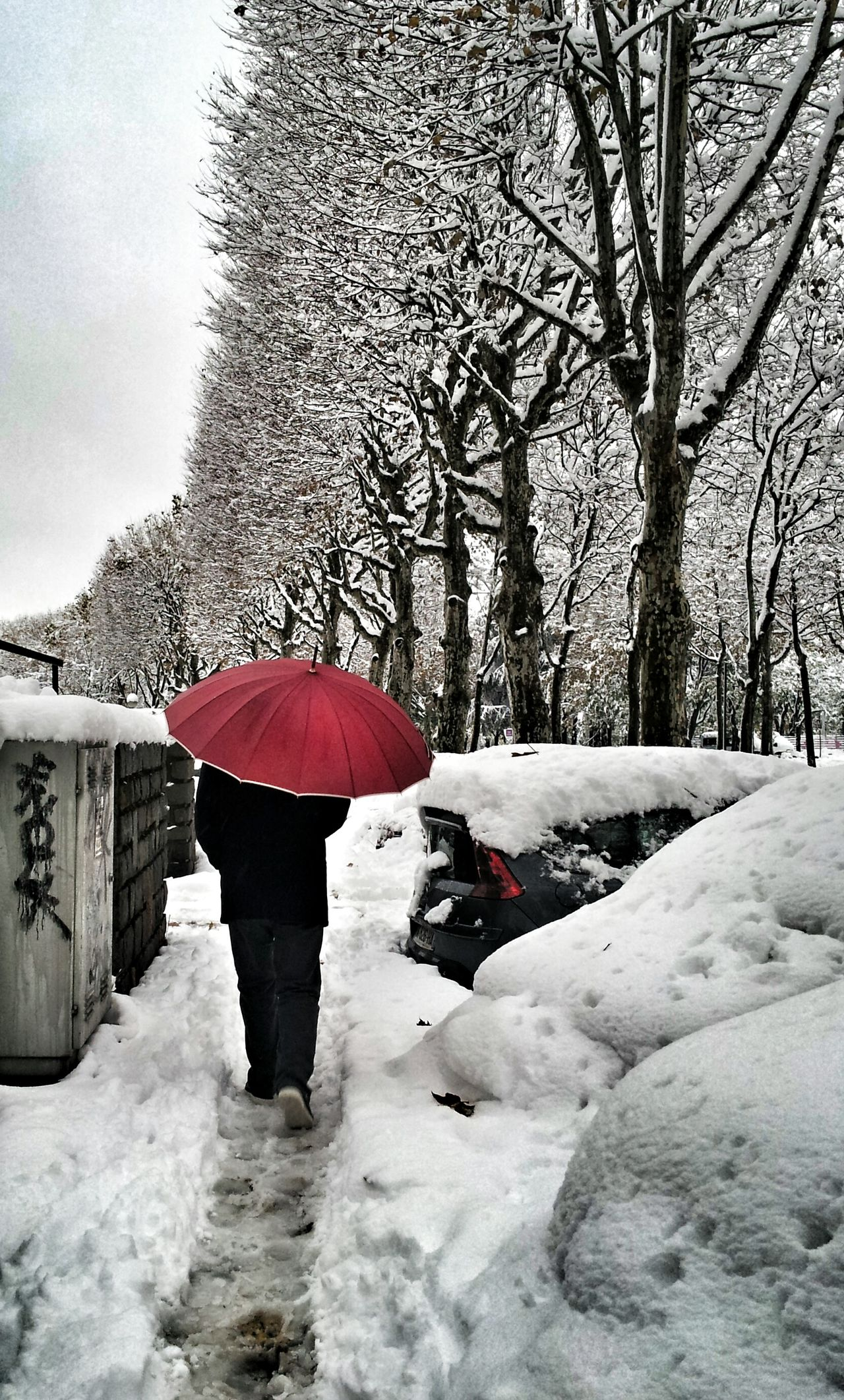 Beautiful stock photos of umbrella, Car, Cold, Cold Temperature, Covering