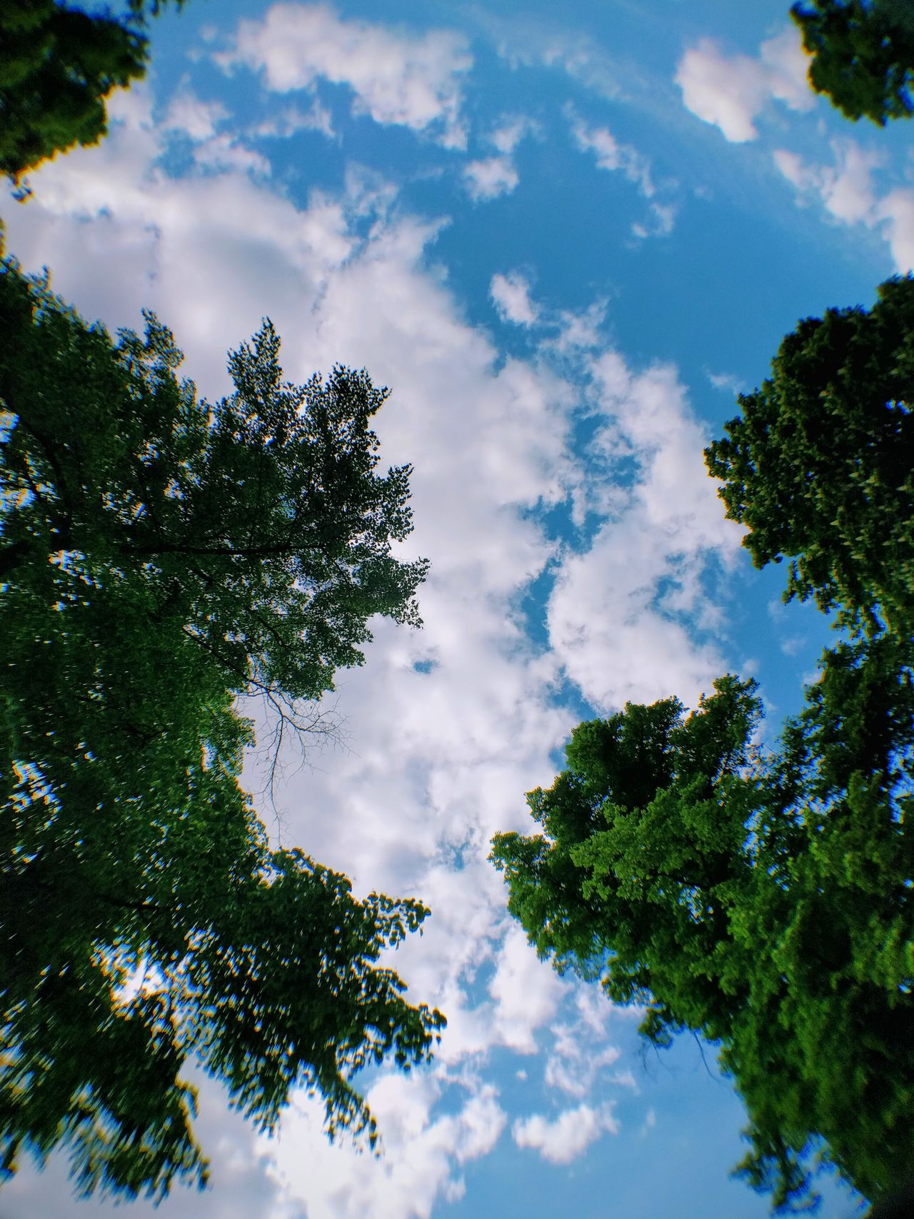 Tree Sky Cloud - Sky Low Angle View Nature Outdoors Forest Day Blue No People Beauty In Nature Branch Summer Leisure Activity