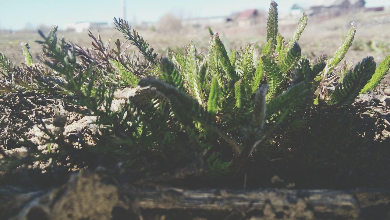 First Eyeem Photo Nature First. :) Spring EyeEmNewHere