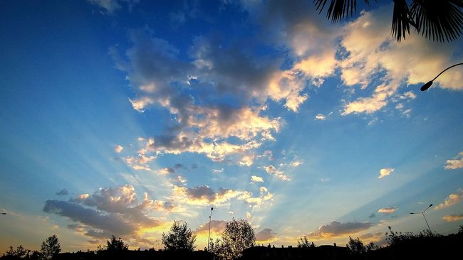 Tree Sky Low Angle View Sunset Silhouette Cloud Scenics Beauty In Nature Cloud - Sky Tranquil Scene Tranquility Nature Growth Sunbeam Majestic Blue Outdoors High Section Day Cloudy