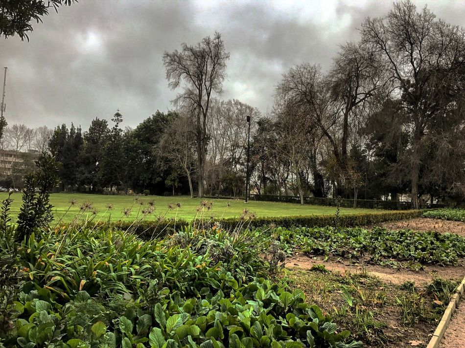 Parque municipal Nature Tree Growth Tranquility Sky No People Tranquil Scene Beauty In Nature Cloud - Sky Day Scenics Outdoors Landscape Green Color Field Plant Grass