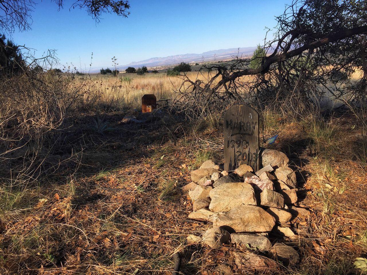 Sonora Desert Petcemetery Landscape Non-urban Scene